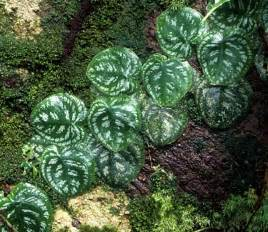 Plants In Tropical Rainforests - rainforest plants tropical rainforest plants funny pictures