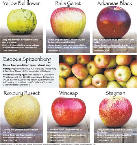 apple varieties related keywords suggestions for names of apple varieties