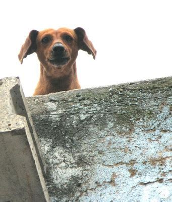 roof dog type your account name into google images and post the