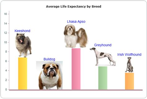 dogs lifespan breeds with span breeds picture