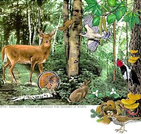 environment: endangering our forest's biodiversity