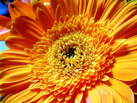 Pilze Für Garten by Zum Geburtstag Recht Viel Gl 252 Ck Geburtstagsgl 252 Ckw 252 Nsche