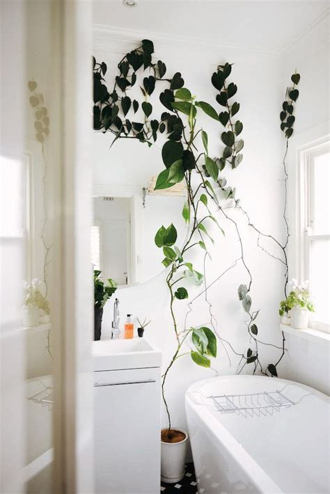 Bathroom Plants Low Light by 17 Best Ideas About Bathroom Plants On Indoor