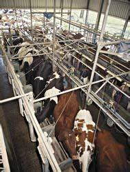 321 best images about cows dairy on a cow