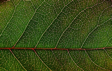 leaf pattern photography green leaf in macro photography 183 free stock photo
