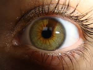 what color is hazel in humans heterochromia a gallery on flickr