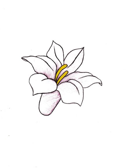 how to draw different flowers flowers drawing pictures