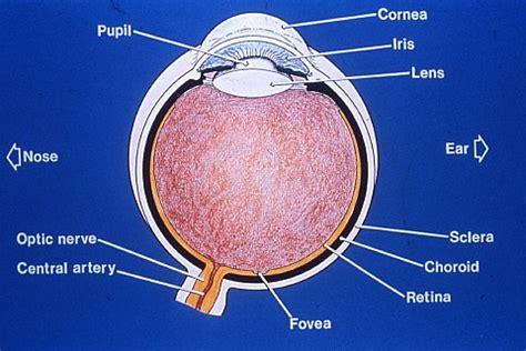 Vitamin Eye Bright lecture 7a vitamins minerals part 1