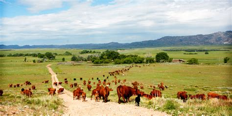 dude ranch the future of the cattle market for wyoming ranches