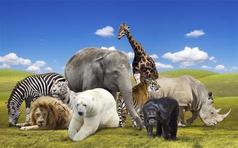 october 4 happy world animal day the chicago