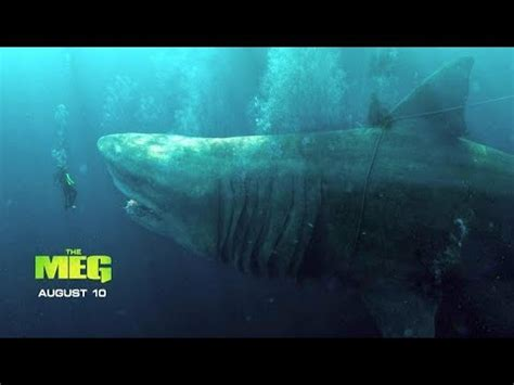 new look at the megalodon shark || the meg [2018] most