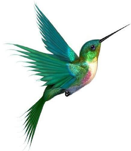 colors of hummingbirds stunning color hummingbird idea