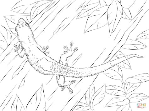 madagascar day gecko coloring page free printable