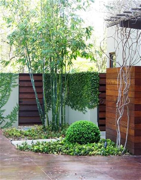 backyard bamboo garden modernize your garden with bamboo the garden glove