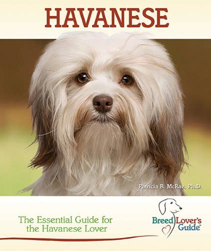 traits of havanese dogs all about havanese dogs behaviours characteristics and more havanese breeders