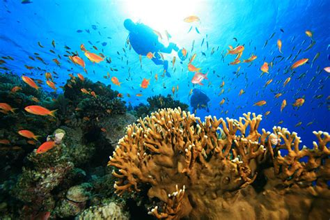 best place to scuba dive best scuba diving on south pacific cruises cruise