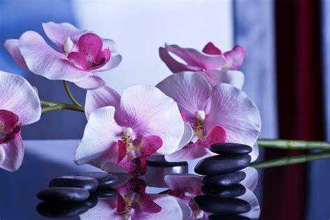 imagenes flores relajantes fotos gratis flor p 250 rpura p 233 talo relajarse descanso