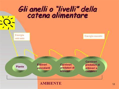 catena alimentare definizione ecologia