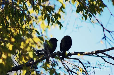 two love birds on a tree branch photograph by trude janssen