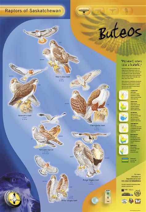 Saskatchewan Records Free Wildlife Posters Saskatchewan Wildlife Federation