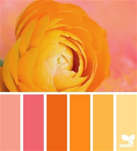 warm orange color orange color palette color palettes pinterest