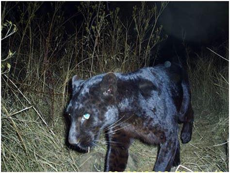 kentucky department of fish & wildlife mountain lions