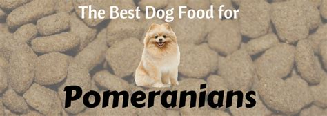best food for pomeranian puppy the best types of food for pomeranians