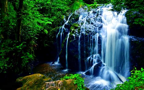nature beautiful waterfall green noise rock fern green