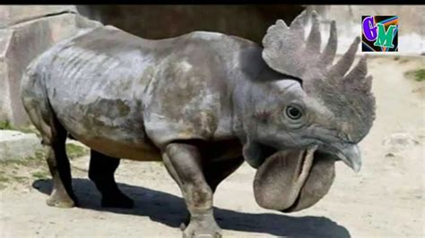 imagenes animales raros reales los animales m 225 s extra 241 os del mundo youtube