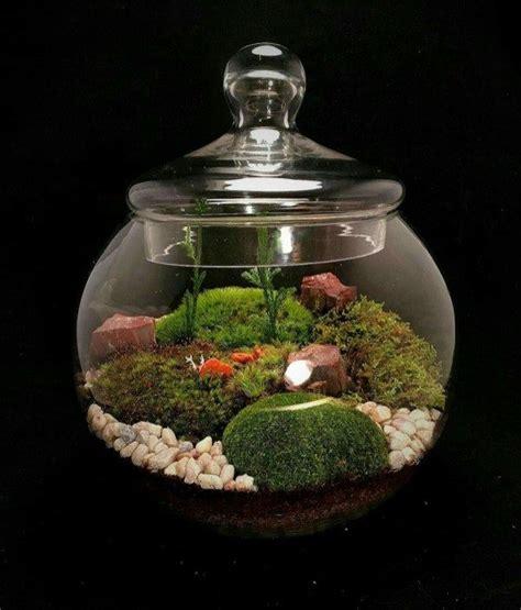 stunning bonsai terrarium miniature landscaping jars
