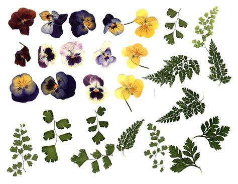 quadri di fiori secchi fiori secchi pressati fiori secchi come usare i fiori