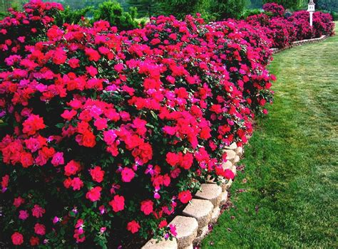 flower patio flowers sun patios and