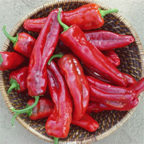 hot pepper seeds small red chili