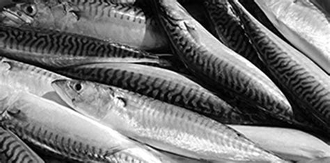 Minyak Hati Ikan Kod ask s s