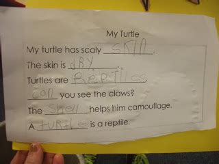 7 Letter Words Ending In Yen Mrs Huff S Kinderblog Reptiles