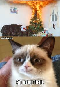 the opposite of grumpy cat aww
