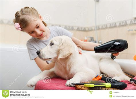 puppy s at home grooming of s at home stock photo image 51964276