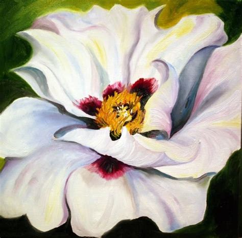 white poppy 24 best images about white poppies amapolas blancas on