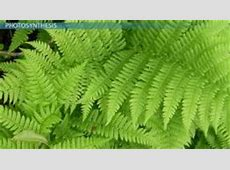 Ecology Consumer: Definition & Explanation - Video ... Habitat Fragmentation Definition Biology