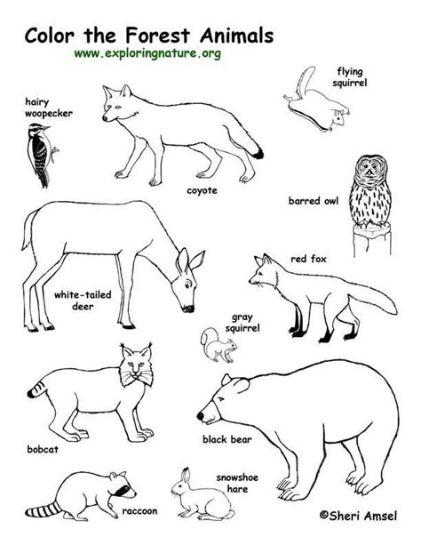 coloring pages of animals in their habitats 30 best coloring habitats and animals images on pinterest