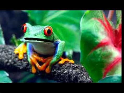 virtually frogs how to stay afloat in the dating pond books tropical rainforest tree frog