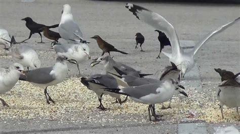 can birds eat popcorn