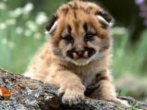 plus1press baby animal adorableness