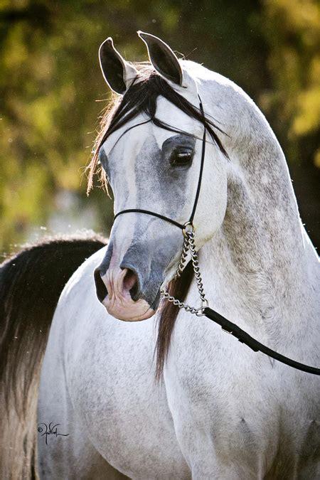 the horse the epic el capitan ranch epic mp