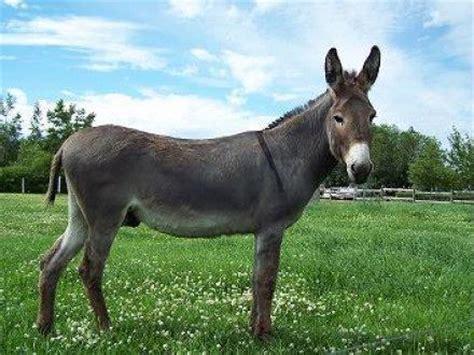 donkey | beast wars transformers wiki | fandom powered by