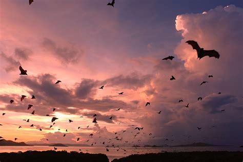 kalong island secret bat island komodo national park
