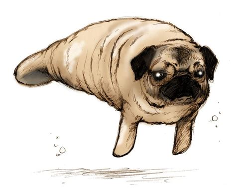 pugs that don t grow 25 best ideas about pug on pug puppies baby pugs and pugs