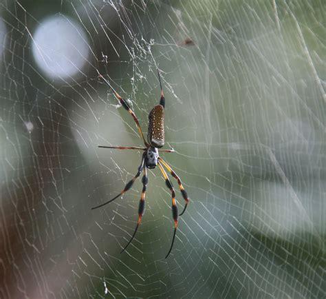 Garden Spider Sc South Carolina Spider Flickr Photo