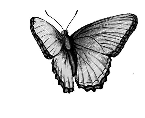 How To Draw Butterfly How To Draw A Butterfly Draw Central