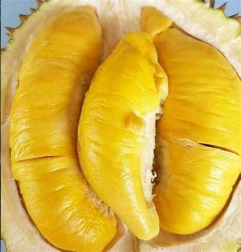 gara gara virus corona harga durian turun drastis
